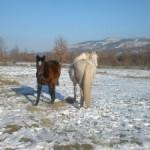 Wuemba & Sedal (Enero de 2003)