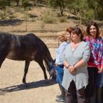 Conocer y Observar al caballo. 06-2017
