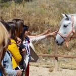 Conocer y sentir a los caballos. 06-2017.